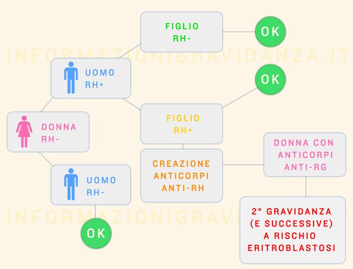 calcolo-fattore-rh-per-eritroblastosi