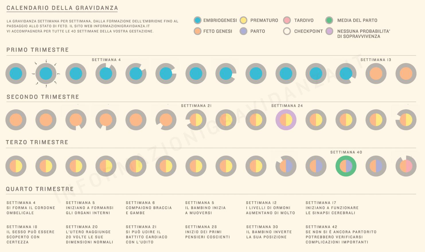 settimane-di-gravidanza-infografica